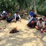 Vĩnh Long: Hàng chục đối tượng tham gia đá gà đã bị bắt